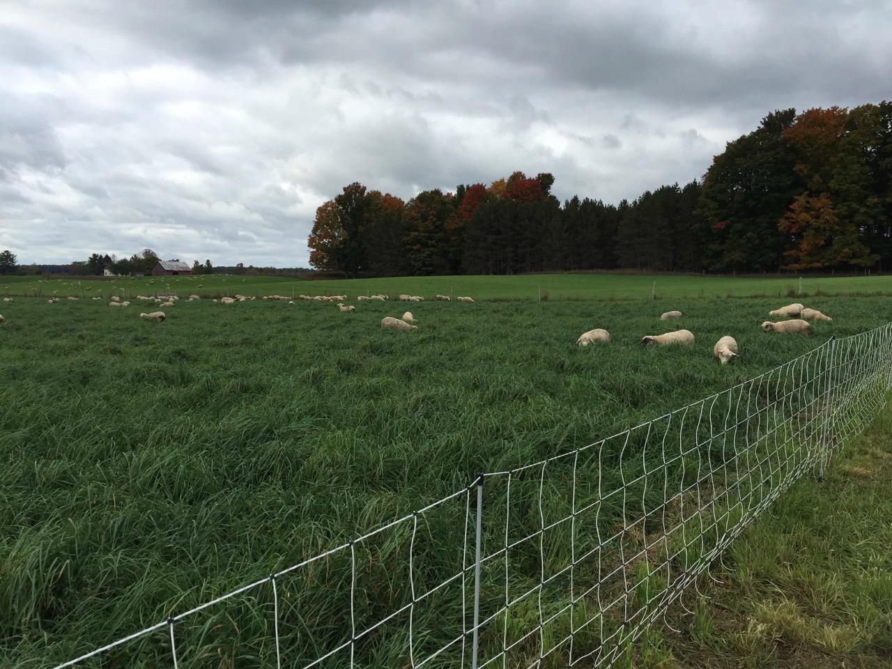 Sheep net fence